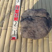 浅間石(30cm)